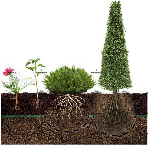 Augalų visuma