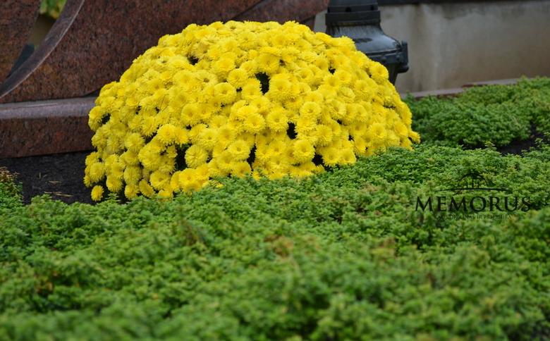 Kapo apželdinimas geltonomis gėlėmis