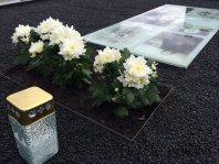 Kapų dizaino nuotrauka po kapo apželdinimo dekoratyvinėmis pušimis Marijampolėje